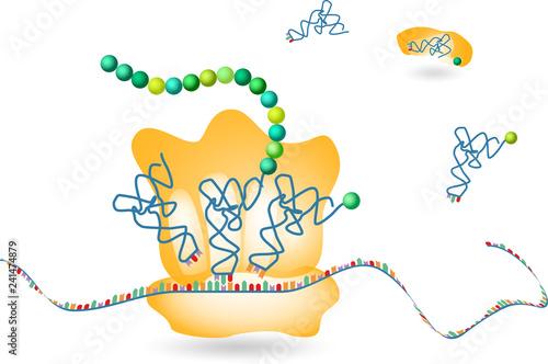 Photo Protein Biosynthesis