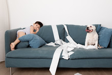Boy And Dog Making Mess With Toilet Paper On Couch