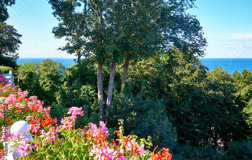 Photo  View over the geraniums and trees on the Baltic Sea