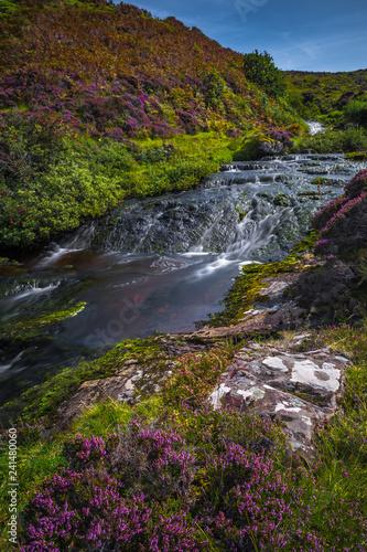 Zdjęcie XXL Moutain Rzeka Z Wodospadem Kaskadowym W Scenicznej Dolinie Z Kwiatami Na Wyspie Skye W Szkocji