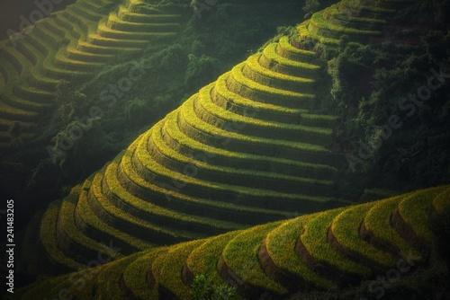 Fotobehang Rijstvelden Tailanda y sus maravillas