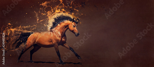 Fotografie, Obraz  Powerful stallion galloping. Concept illustration