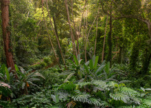 Atlantic Forest Remnant From Close Featuring Dense Vegetation And Vines