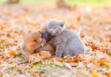 Playful Mixed Breed Puppy And  Kitten Together On Autumn Leaves At Sunset