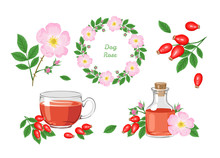 Dog-rose Flowers. Set Of Floral Design Elements. Wreath, Bouquet Of Dog Rose Branches, Rosehip Tea, Essential Oil Isolated On White Background. Vector Illustration In Cartoon Flat Style.