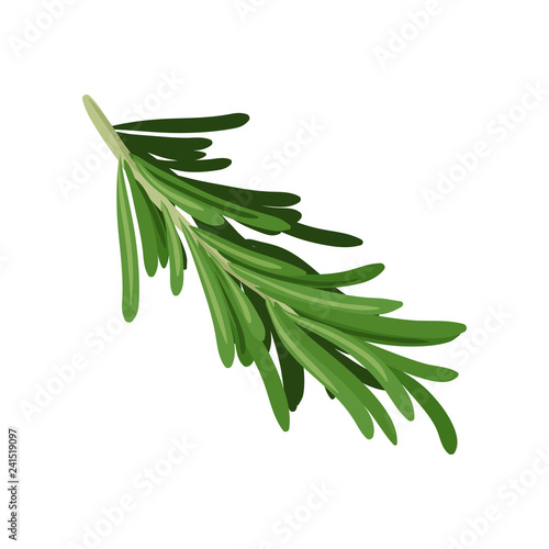 Leinwand Poster Sprig of green rosemary