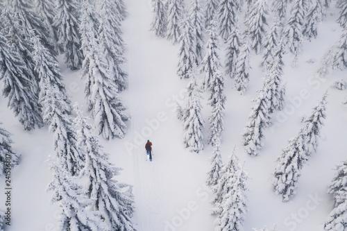 Snowshoes walker in snowy spruce forest