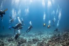 Scuba Diving In The Maldives U...