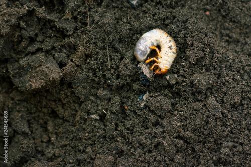 Valokuvatapetti Larva