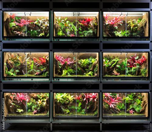 Terrarium Rack A Series Of Nine Tropical Rain Forest Vivarium Ideal