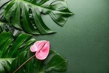 Green Tropical Leaves And Flower On Color Background