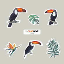 Vector Objects. Toucans And Leaves Set. Watercolor Style. Stickers Design. Summer Colors.
