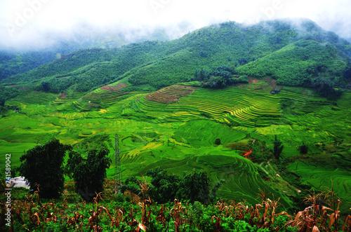 Deurstickers Groene risaia, vietnam, asia laos, cambogia