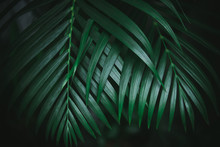 Deep Dark Green Palm Leaves Pattern. Creative Layout, Toned Image Filter Effect.