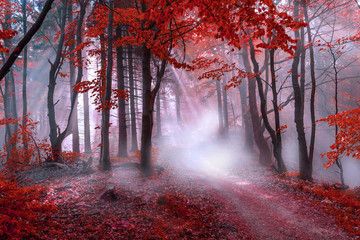 Obraz na Szkle Las Mystical red forest