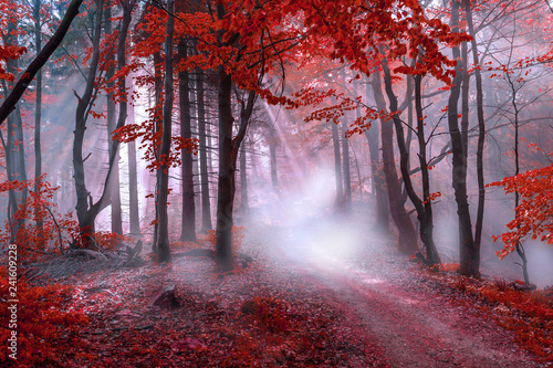 Poster Bossen Mystical red forest