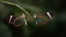 Two Brush Footed Butterflies
