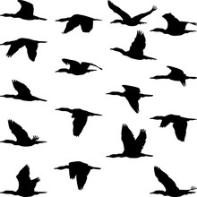 Flying Cormorant Silhouettes