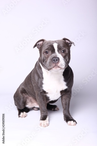 Fotografia Portrait of a beautiful dog
