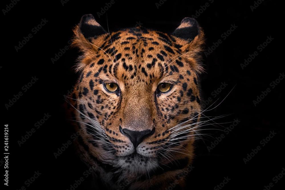 Fototapety, obrazy: Panthera pardus orientali
