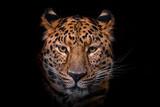 Fototapeta Animals - Panthera pardus orientali
