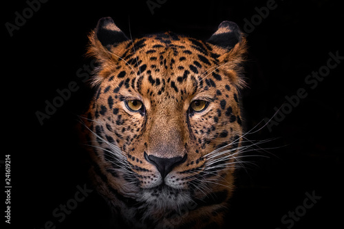 Door stickers Leopard Panthera pardus orientali