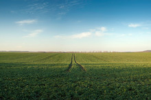 Panoramic Photo Of Green Field In Spring On A Sunny Day Against The Blue Sky. Green Seedlings On The Field In Spring On The Farm. Agricultural Economy As A Background.