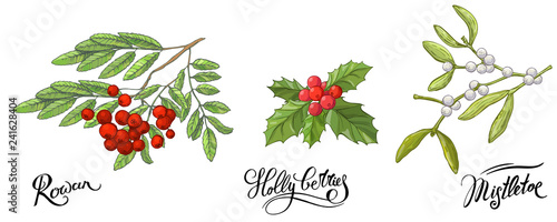 Fototapety, obrazy: Rowanberry branches with leaves and berries, mistletoe and Holly berry. Hand drawn sketch, vector doodle color illustration and lettering names