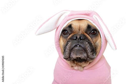 Deurstickers Franse bulldog Portrait cute French Bulldog dog girl in a pink easter bunny costume on white background