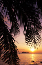 Palm Leaf On The Background Of A Bright Sunset On A Tropical Beach, In Soft Focus