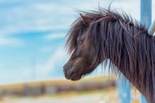 Foal Horse Pony. Farm For Bree...