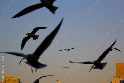 Foto op Canvas Draw seagulls flying in the sky