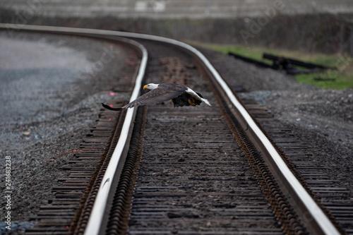 Canvas Print An Eagle Flying over Train Tracks
