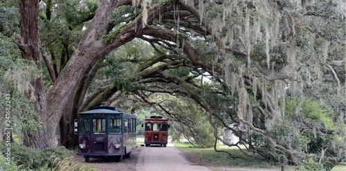 Canvastavla Charleston Tea Plantation