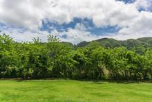 Karibische Landschaft