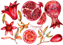 Beautiful Watercolor Set With Fruits And Flowers Of Pomegranate