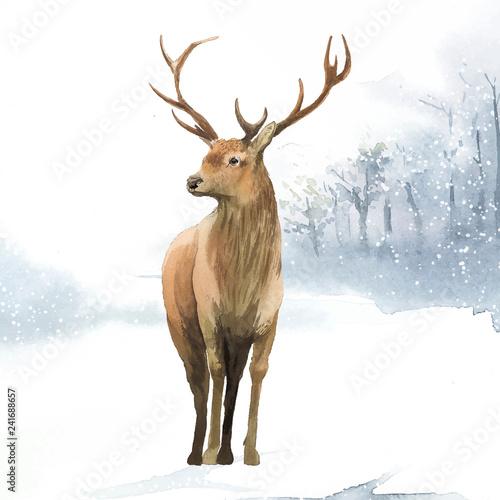 Naklejki Jeleń   samiec-jelenia-namalowany-akwarela-wektor