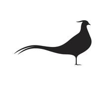 Pheasant Silhouette. Isolated Pheasant On White Background. Bird