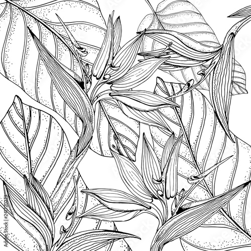 Printed kitchen splashbacks Watercolor Nature Doodle floral tropical background in vector with doodles black and white coloring page. Paradise flowers, banana leaves