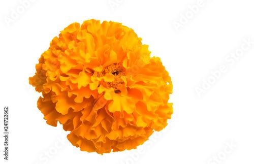 Cuadros en Lienzo  marigold flowers isolated