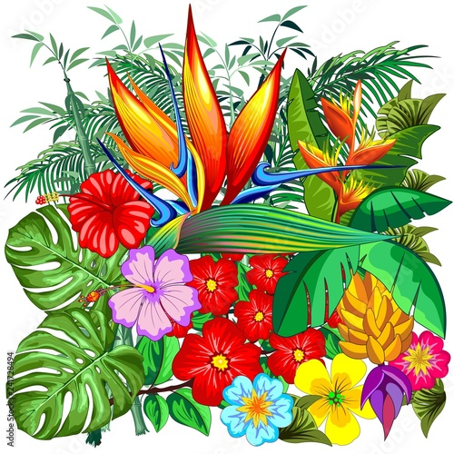 Poster Draw Tropical Nature Botanical Garden Vector Illustration