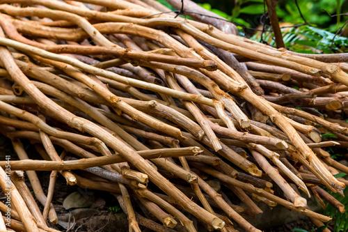 Fotografija Pile of cinnamon tree branches in Sri Lanka