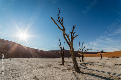 Fotografie, Obraz  Some dead trees in dead vlei photographed with the backlight of the sun