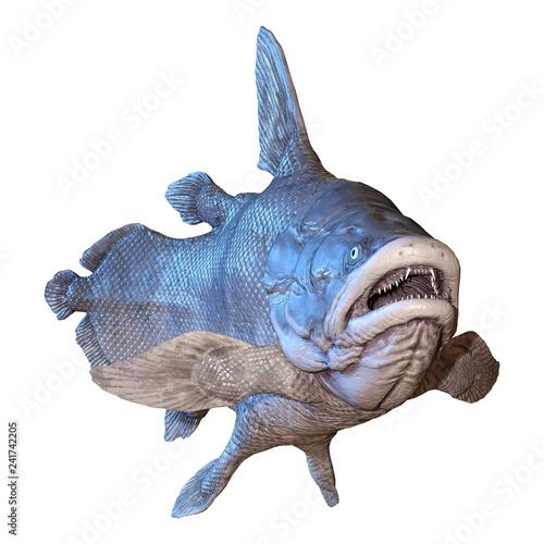 Obraz na plátně 3D Rendering Mawsonia Fish on White