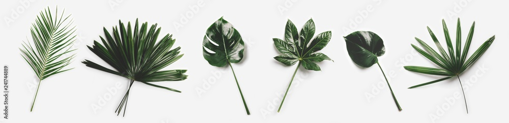 Fototapety, obrazy: Green palm leaves isolated on white background.