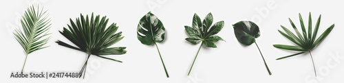 Wall Murals Floral Green palm leaves isolated on white background.