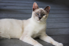 Cross Eyed White Cat Laying On A Porch