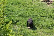 The Gorillas Of The Cabarceno ...