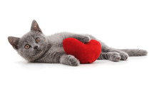 One Beautiful Cat With The Heart.