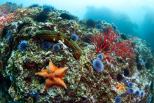 Starfish, Coral And Urchins